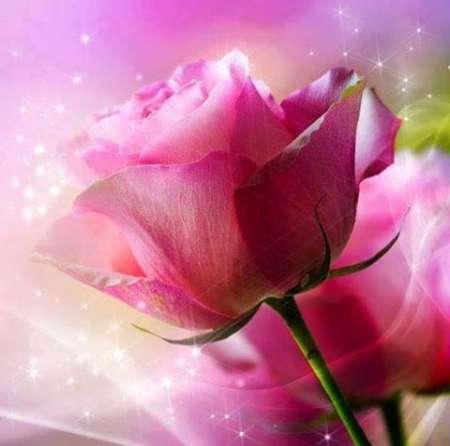 200 roses pour une soirée très chaud